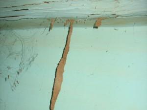 Tunel terroso termitas 2
