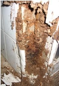 Daños provocados por termitas